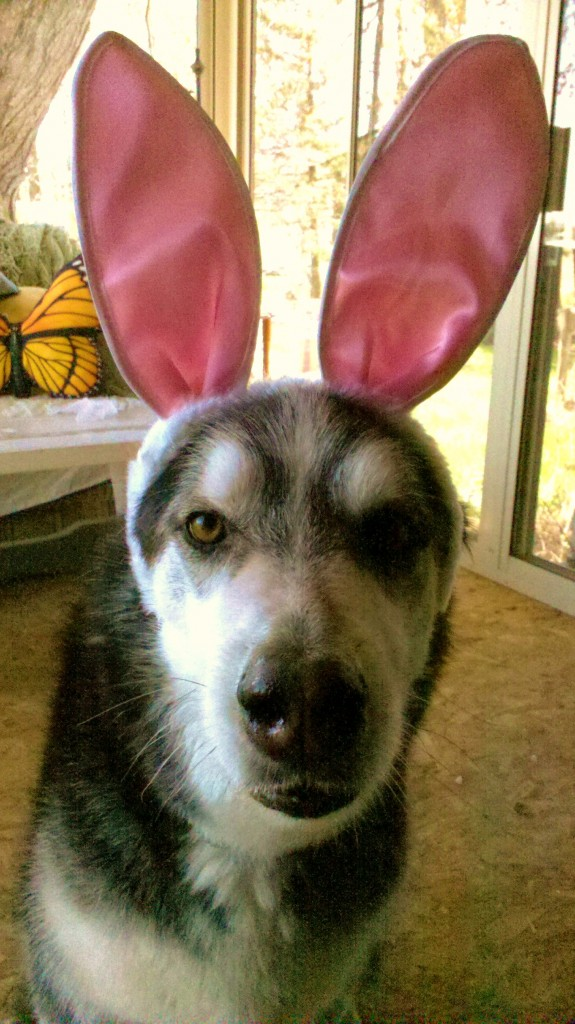 Kody the Easter Dog2