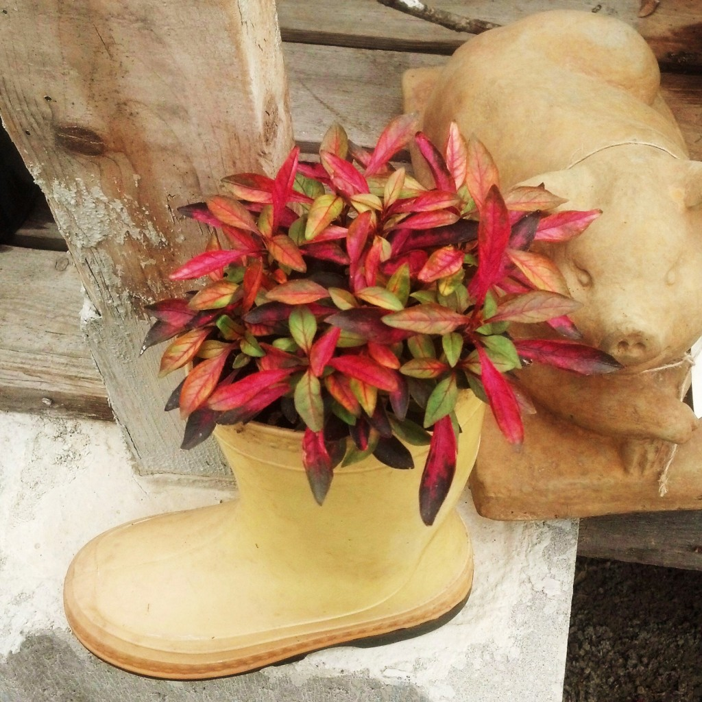 plant in boot at Lowneys