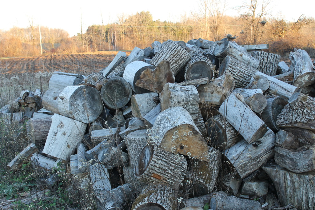pile of logs waiting to be cute tables