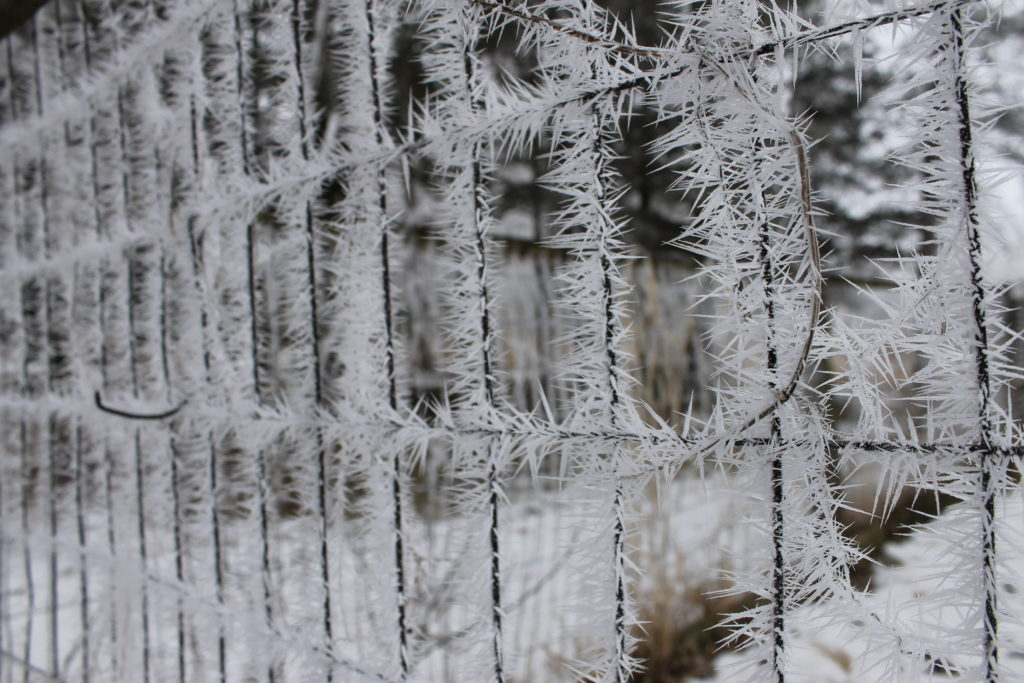 frost on fencefeb2016