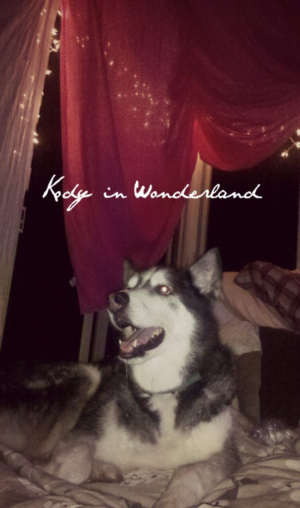 Kody in wonderland2