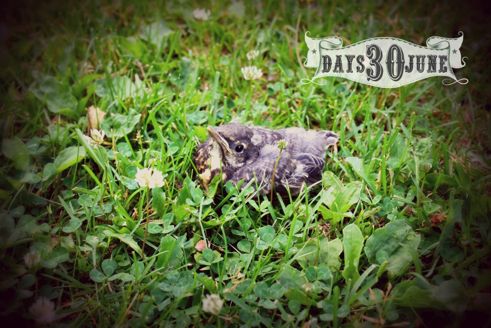 baby bird2 30 days of june 2016