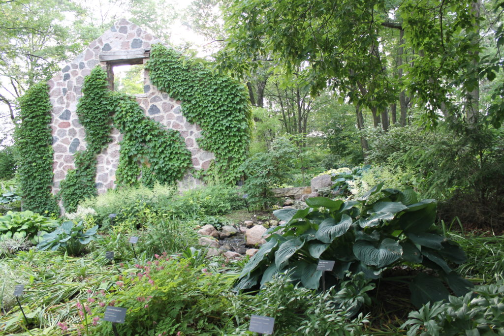 stone wall with hostas at GB botanical garden2015