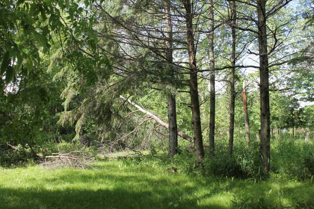 trees down, after the storm june2016