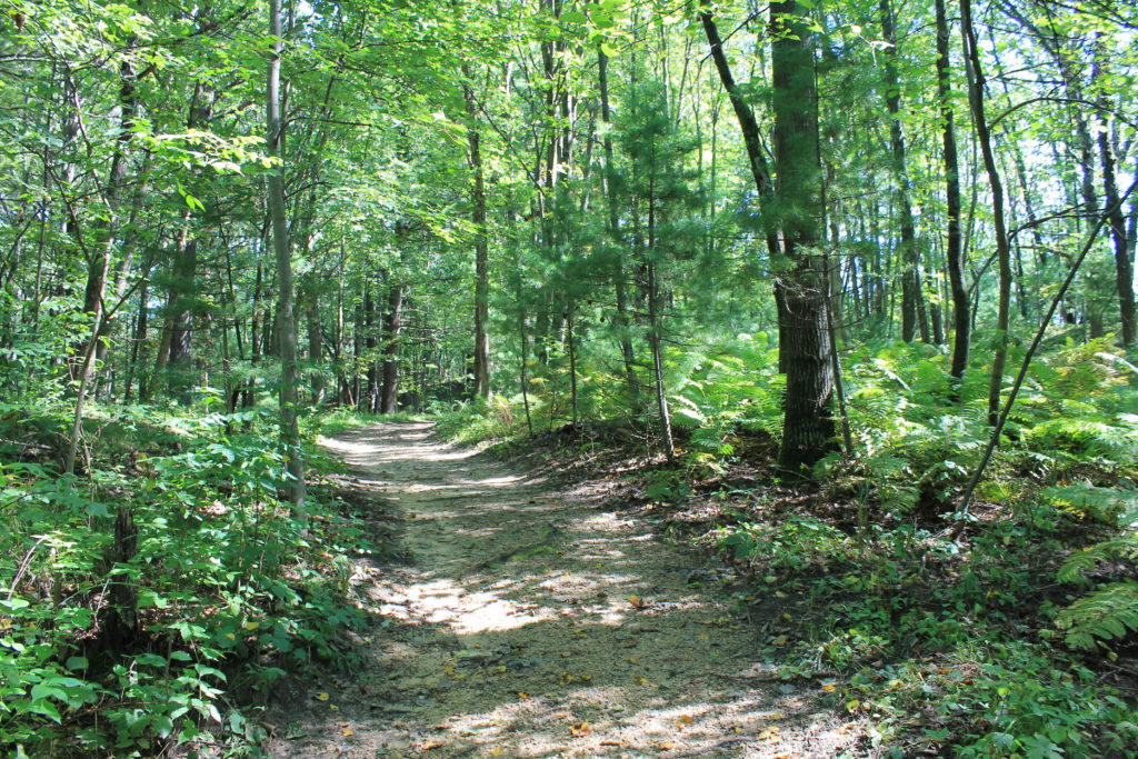 wooded-hiking-trails-at-roche-a-cri-2016