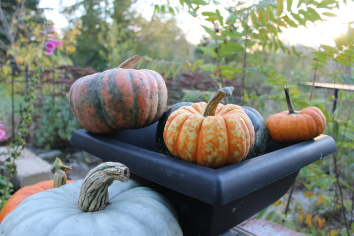 close-up-on-pumpkins-and-gourds-oct-2016