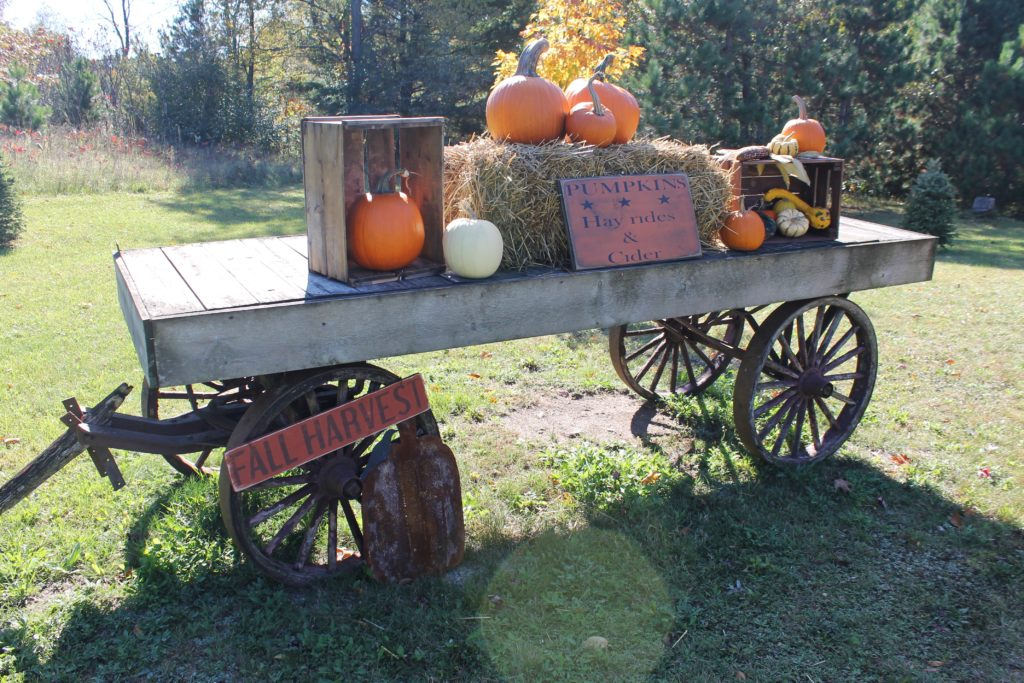 millers-wagon-full-of-pumpkins-and-crates